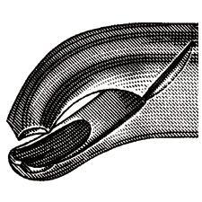 "Extracting Forceps – # 17, 6-1/2"""