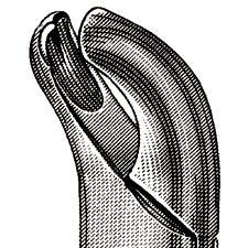 Pince – nº18R, droit d'extraire