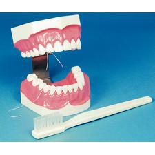 Modèle d'étude Brush-N-Floss avec brosse à dents surdimensionnée