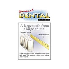 "Unusual Dental Facts Assortment Pack Personalized Postcards, 4-1/4"" W x 6"" H, 1,000/Pkg"