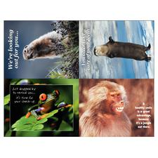 Wildlife 4-Up Laser Postcard Assortment Pack, 5-1/2