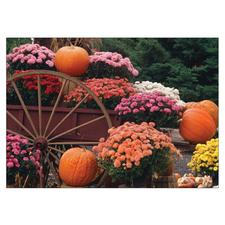 Fall 4-Up Laser Postcards, 100/Pkg