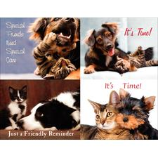 Pet Pals Laser Assortment Postcards