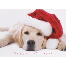 Animal Holiday Greeting Cards with Personalized Envelopes, 50/Pkg